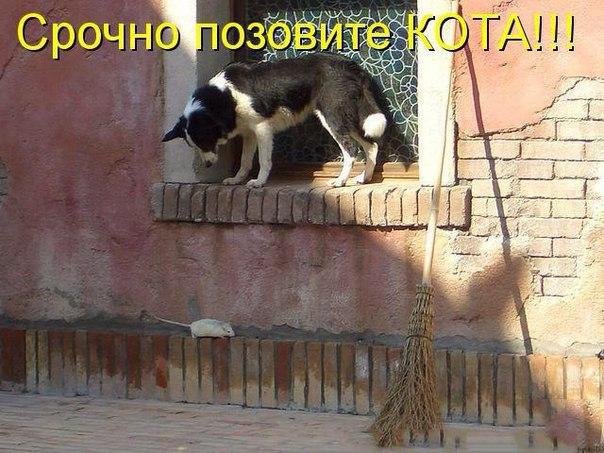 http://cs615721.vk.me/v615721345/3e51/icPhyxdeY_E.jpg