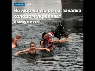 Красноярские моржи