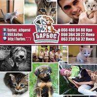 barbos_uzhgorod