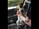 Little doggo minutes after being rescued (why do we deserve dogs...?)