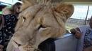 Ну лев Филя и ОТЧУДИЛ Выгнал всех