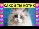 КАКОЙ ТЫ КОТИК Тест для кошечки МурМяу Игры как мультики для детей
