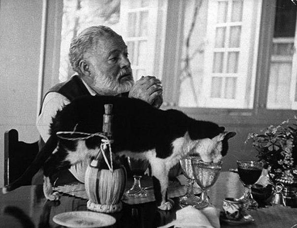 Шестипалые талисманы Эрнеста Хемингуея На момент смерти писателя у него было 57 кошек и все они были шестипалыми. Известно, что такие котики считаются «талисманами удачи» для моряков и
