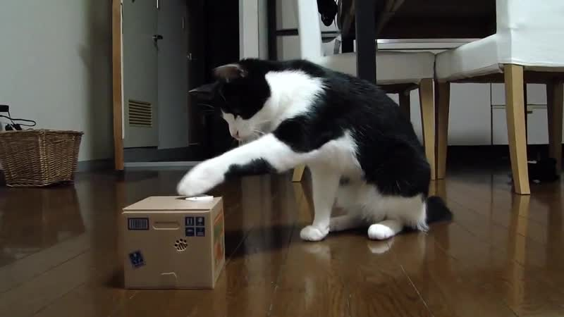 Great Cat Bank Robbery