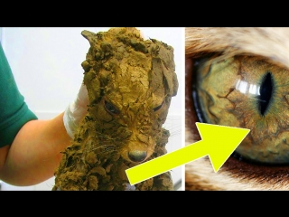 Строители думали, что нашли грязного щенка, но они очистили его и получили сюрприз