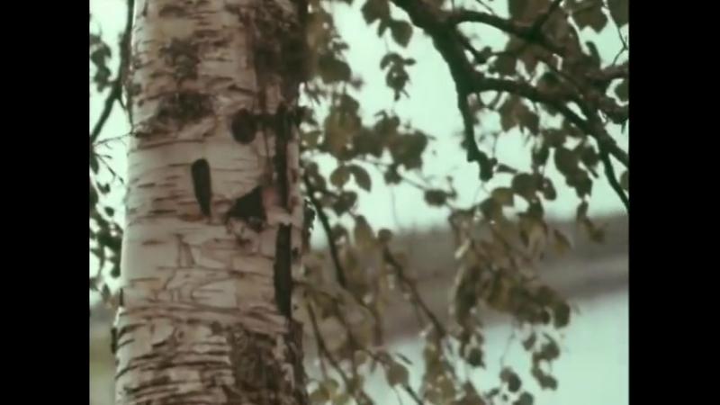 Северный хор (1970г) - Расставались у берёзки Музыка — А. Мосолов, слова - В. Боков.