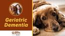 Старческая деменция у собак / Geriatric Dementia