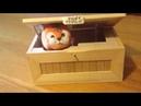 Disco 80s. Rаdiоrама - Desire Exit Grey. Magic cat funny box moderm mix