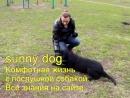 гиперактивная собака важный момент