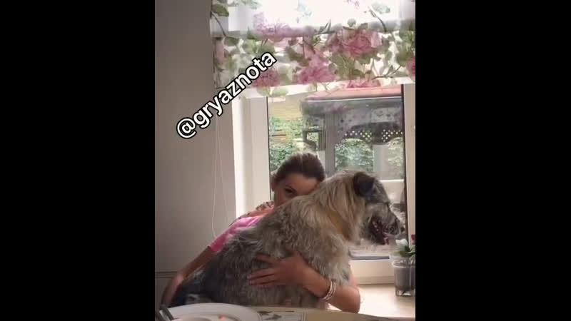 Собак любит не только Панин