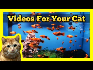 Videos for your Cat - Spotted Orange Mollies in a Fish Tank