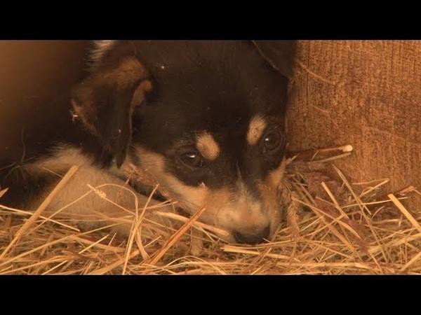 Сюжет ТСН24 Зоозащитники требуют закрытия приюта собак в Веневе