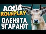AQUA RP - Оленята Захватили Сервер! (16+) #7