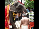 World's oldest elephant in captivity dies at 88 in India
