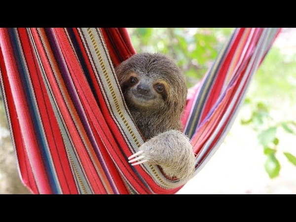 Hanging Out With Costa Rica's Orphaned Sloths