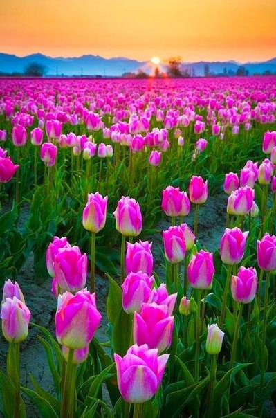 Доброе утро! Солнечного вам, радостного, счастливого дня!