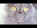 Поющий кот Сальвадор - 3 часть  Salvador singing cat - part 3