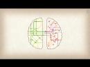 Инь-ян = Левое полушарие-правое полушарие