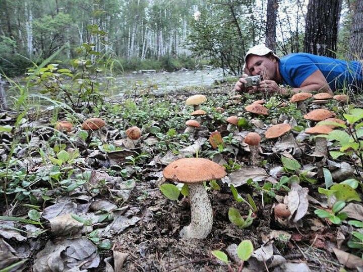 Приснилось много белых грибов