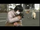 Япония пёс выжил после цунами