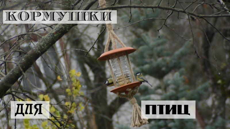 Простые кормушки для птиц своими руками - за 15 минут!/ Сад без химикатов - это реально?