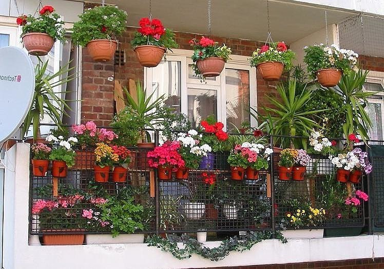 Какие цветы посадить на балконе чтобы цвели всё лето