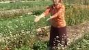 Органическое земледелие 30 соток без лопаты Повышаем плодородие почвы