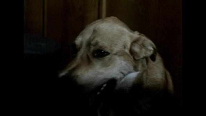 Солёный Пёс