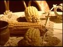 д/ф «Фенимор КУПЕР» («Encyclopedia Channel», 2005)