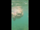 Мой дельфинчик 🐬 по имени Аннушка