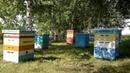 Улей Дадан Dadanovskiy beehive for bees