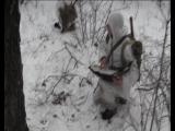 Полевой зимний выход  Каскад 2018