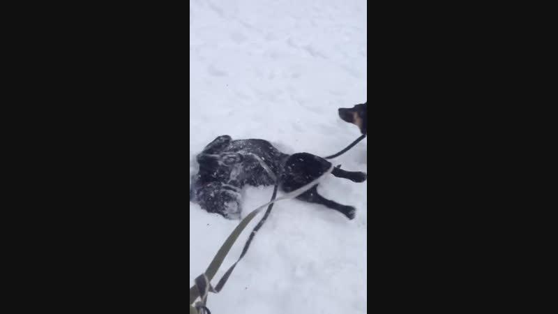 Рикс любит снежные ванны)
