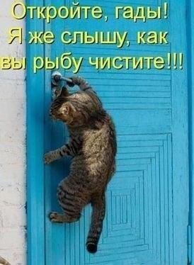 http://cs311224.vk.me/v311224390/141a/-xbPfnVKDRc.jpg