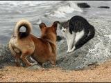 Собаки боятся кошек. Смешная подборка часть 1