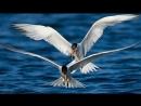 Полёт птиц.