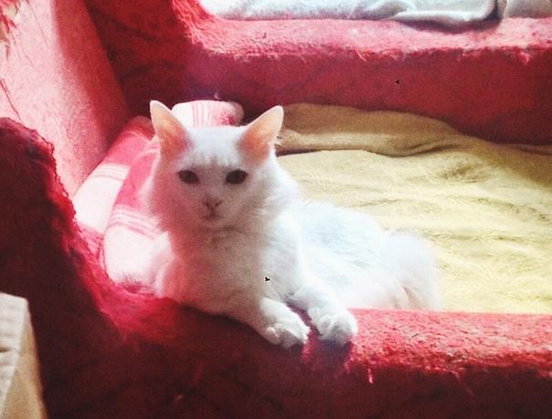 Кошка Белочка ищет дом