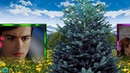 Панорамное видео по мотивам сериала Ради любви я все смогу Костя и Маша