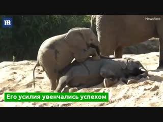 В Южной Африке туристы застали необычный эпизод из жизни слонов
