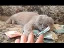 Ох какой наглый котёнок 🤔