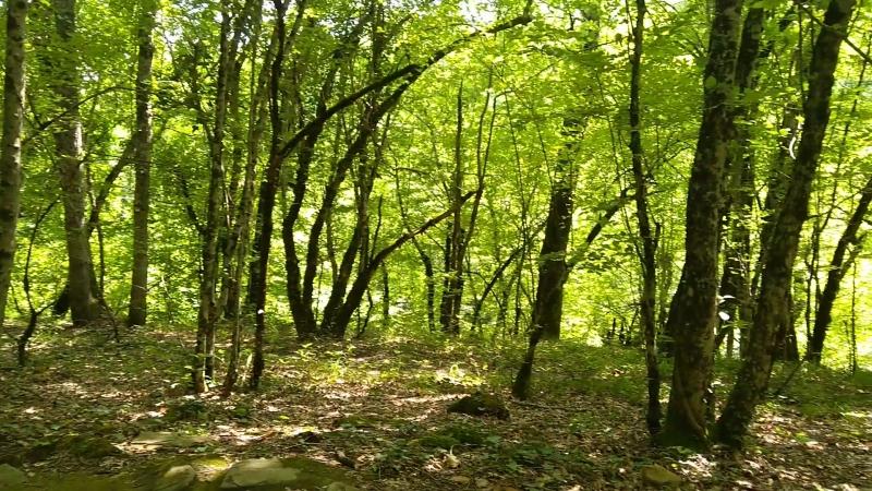 лес, дольмены