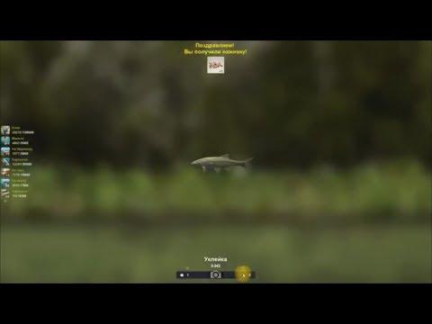 Уклейка ловля уклейки мини турнир между командами в игре Трофейная рыбалка 2