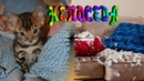 ⭐ Весёлый Котёнок - Тигрёнок ⭐ Мой маленький котенок резво скачет и играет Bengal Сat kitty 2019