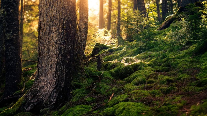 3 часа! Звуки леса Живой лес
