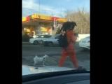 Собака, два енота и тигр на прогулке. Краснодар.