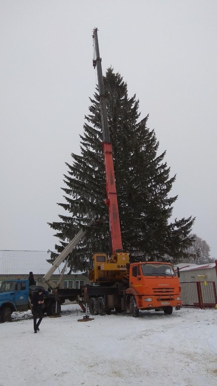 Сегодня на Красной площади установят главную елку Курска