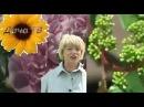Как выращивать пионы и виноград Как повысить урожайность Урожайные грядки Дача ТВ
