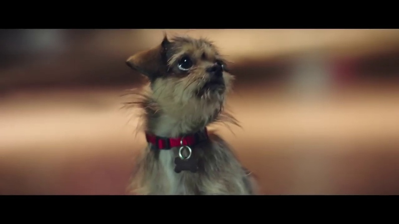 A heartwarming Christmas story 'Lily' Meijer Commercial