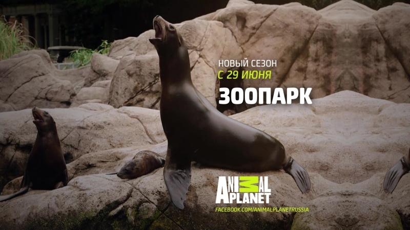 Зоопарк Animal Planet
