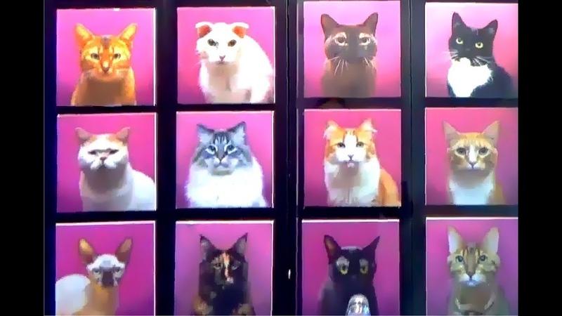 Кафе кошек / котики / Республика кошек / Санкт-Петербург / Cats Cafe